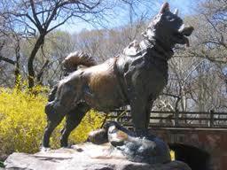 Balto, chien de traineau, husky sibérien, course au sérum, Alaska, médicament anti-diphtérique, Leonhard Seppala, castré, chien, animaux, insolite,