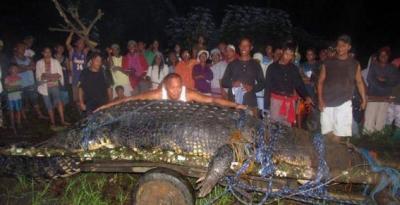 le plus grand, crocodile, insolite, capturé vivant, spécimen, attaqué du bétail, reptile, autorités, Guinness Book des records,