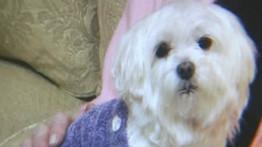 kidnappeurs de chiens, réclament, 226000 euros, rançon, Ausralie, homme d'affaires, faire chanter, menaces, insolite, animaux,