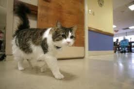 chat prédit la mort, Oscar, pensionnaires, maison de retraite, étrange, paranormal, Dr David Dosa, dons, mystère, s'éterniser,
