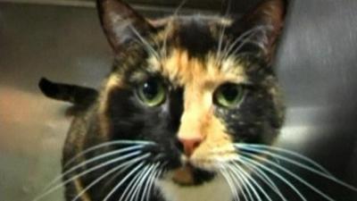 un chat, retrouvé, à 3000 km, du lieu, de sa disparition, insolite, félin, Colorado, centre animalier, Willow, matou, puce électronique, propriétaires,