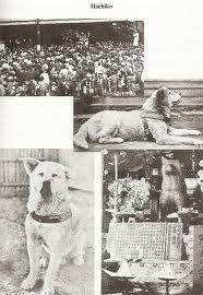 légende d'hachikô, Hatchi, chien, attendu son maitre, décédé, 10 ans, chien Akita, gare de Shibuya, statue, honneur, insolite, animaux,