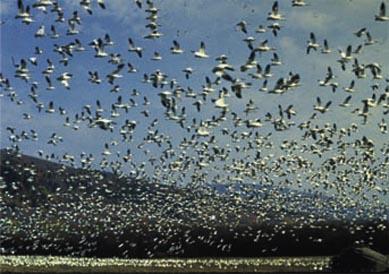 oiseaux attaquent une ville, Phénomène étrange, insolite, Houston, scène surnaturelle, phénomène étrange, mystérieux, Hitchcock, Les oiseaux, arbres, témoins, attaques, fous, sérieuses blessures,