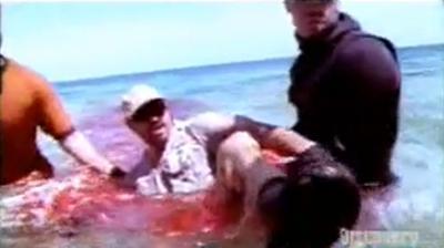 attaque de requin, sur un homme, insolite, vidéo, insouciance, danger, scénario, filme la scène, scientifique, leçon, plongeur,