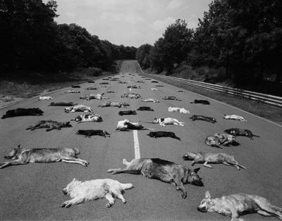 Chiens et chats abandonnes