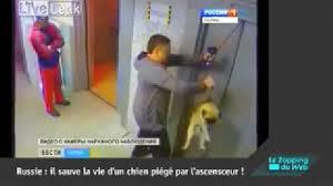 sauve un chien, ascenseur, insolite, carlin, Russie, les portes se referment, mésavanture, laisse coincée dans la porte,