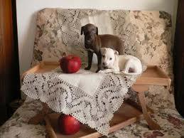 hôtel cinq étoiles, pour chien, en Allemagne, insolite, propriétaire, fidèle compagnon, quatre pattes, hébergement de luxe, dog-sitter,