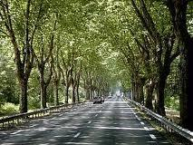 la route maudite, départementale 419, insolite, serpentée d'arbre, petit tronçon, accidents, l'hécatombe continue, inexpliqué,