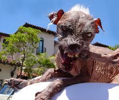 le chien, le plus moche, du monde, insolite, star, mort, Sam, gent canine, laideur, studio de télévision, hôtel de luxe, physique ingrat, limousines,