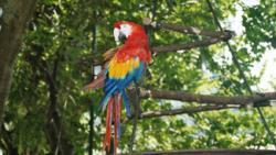 perroquet égaré, donne son adresse, police, insolite, maîtresse, propriétaire, raccompagné, oiseau, envolé, épaule d'un client, hôtel,