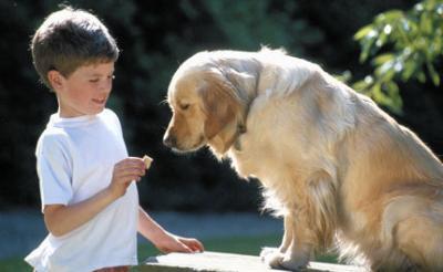 Un enfant sauve par son chien