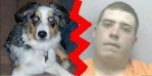 Un homme pris en train de violer un chien